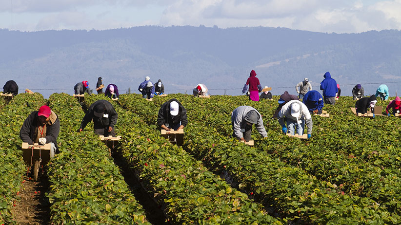 Ottawa announces additional measures for temporary foreign workers